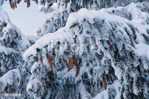 Winterwald mit Tannenzapfen