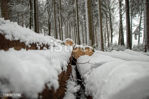 istock snow-covered felled trees in the forest in Germany 1294921740