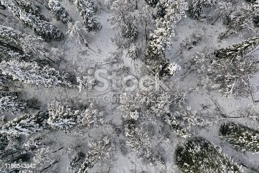 Snow-covered forest in Lapland, Sweden. Image taken directly from above with a drone.