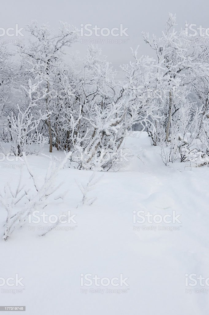 Snow-covered ground and frosted birch forest at skiing resort royalty-free stock photo