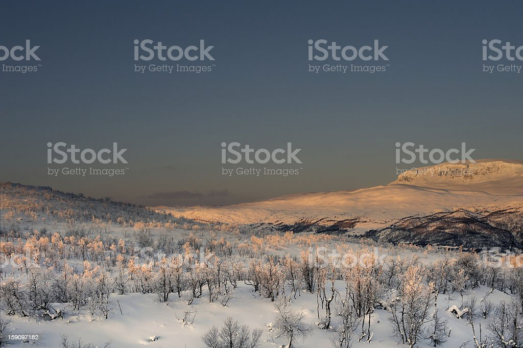 Snow-covered ground and frosted birch forest on winter morning stock photo
