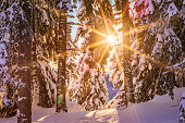 istock Snow-covered landscape and evergreens in Europe on a cold sunny day during Winter - creative stock photo 1309283005