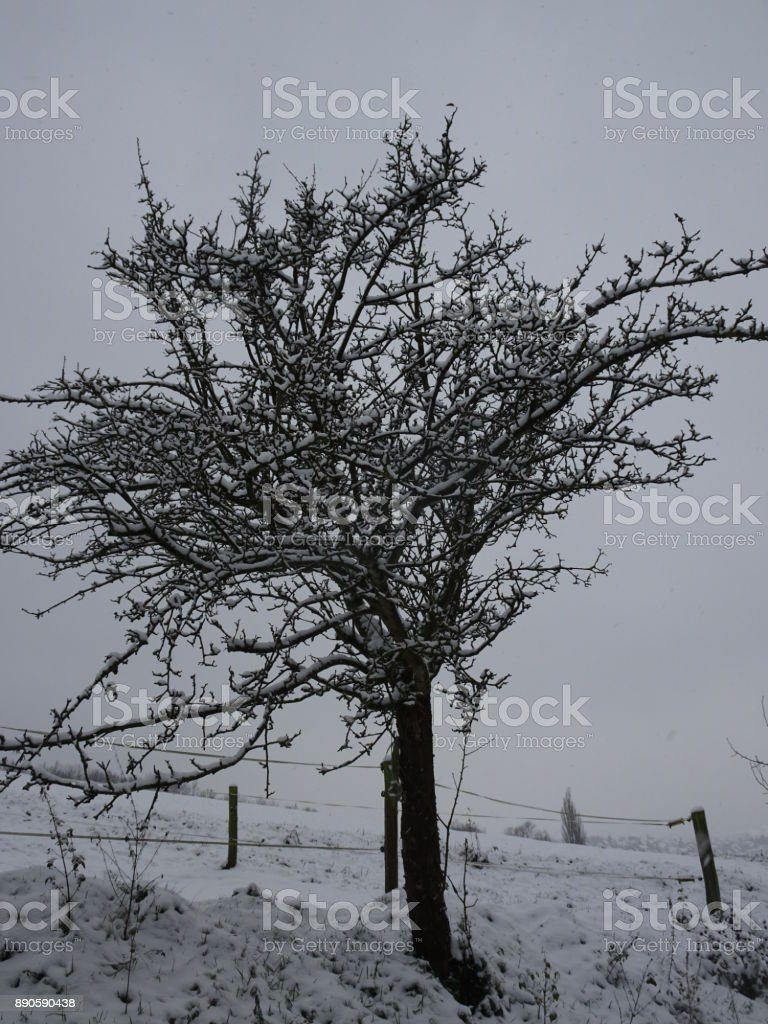Snow-covered landscape with a beautiful apple tree in a small village in Kassel, Germany stock photo