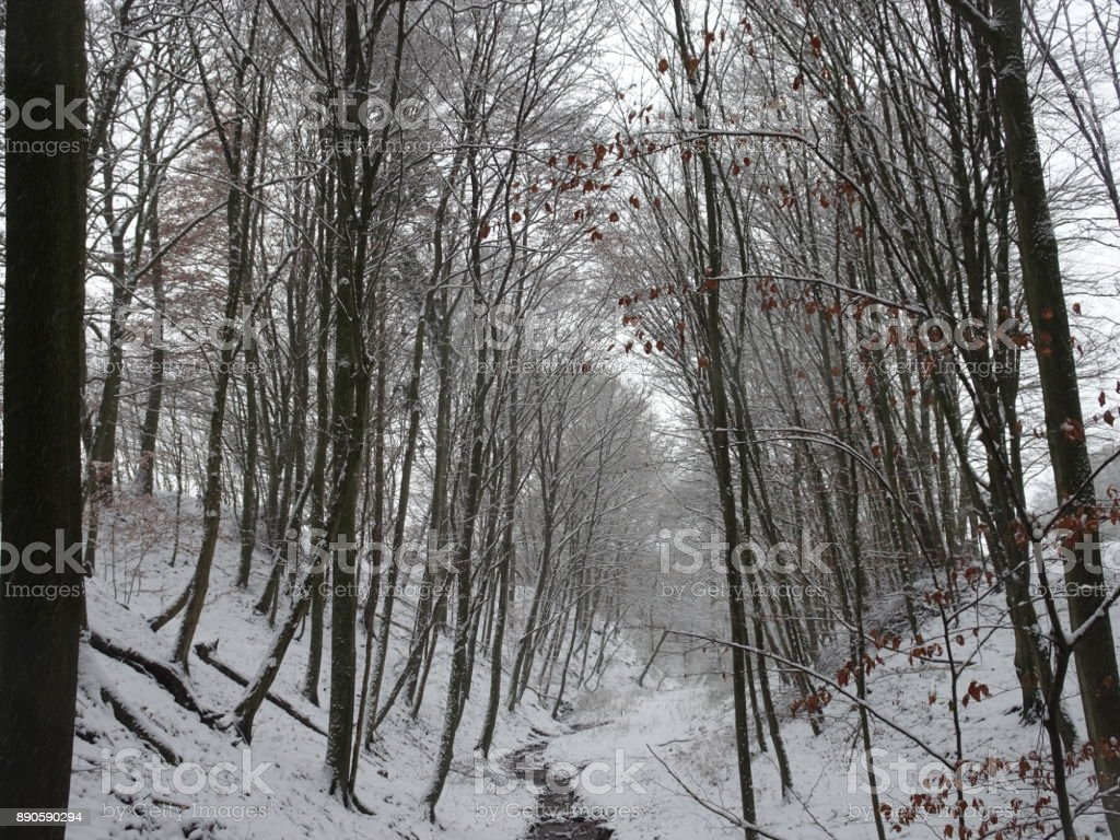 Snow-covered landscape with a beautiful avenue with big trees in a small village in Kassel, Germany stock photo
