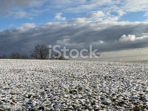 istock Snow-covered meadow with bare deciduous tree 1293293431