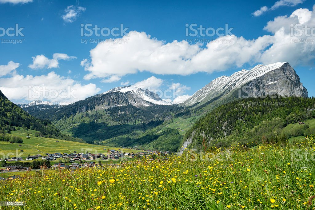 snow-covered mountains and blooming meadow in the alps stock photo
