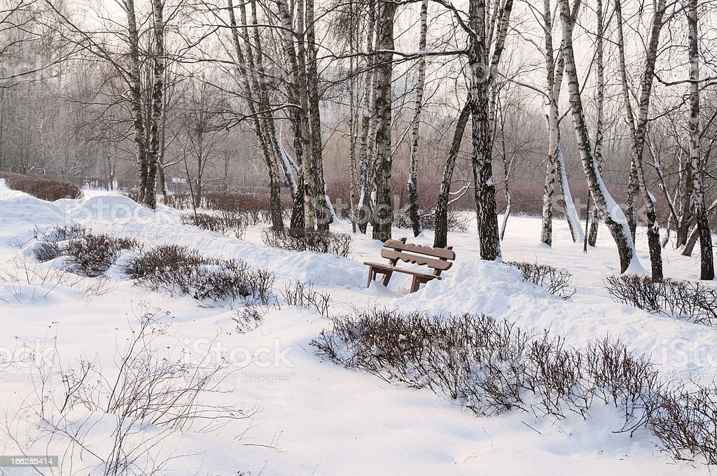 Snow-covered park pathway with hedge along and wooden bench royalty-free stock photo