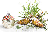 Snow-covered pine branch with cones isolated on white background