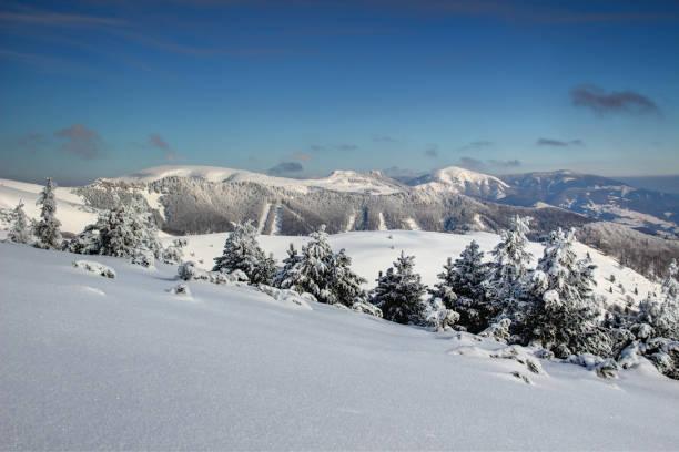 눈 덮인 소나무 및 carpathians, 반스카 비스 트리 카 슬로바키아 중앙에서 velka fatra 범위에 둥근된 봉우리 / 동부 유럽 - 벨리카 파트라 뉴스 사진 이미지