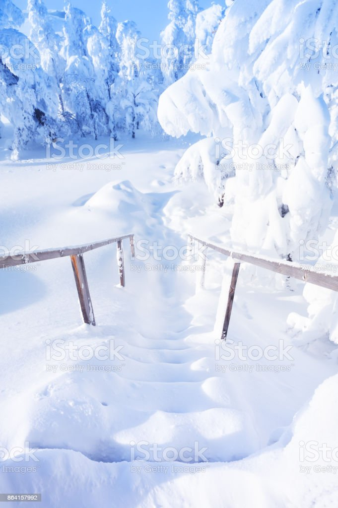 Snow-covered stairs and trees after snowfall. royalty-free stock photo