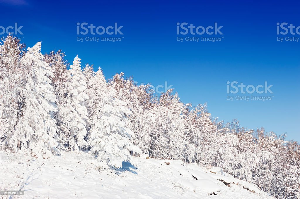 Snow-covered trees against the blue sky royalty-free stock photo