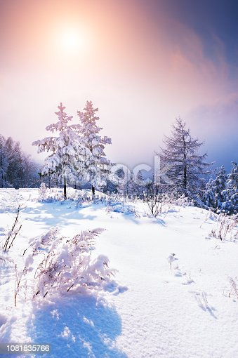 istock Snow-covered trees in winter forest at sunset. 1081835766