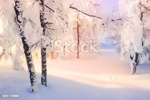 istock Snow-covered trees in winter forest at sunset. 623179898