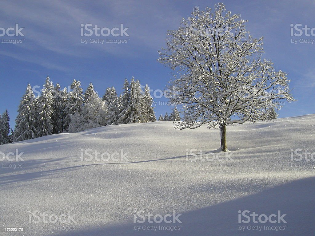 Snow-covered trees royalty-free stock photo