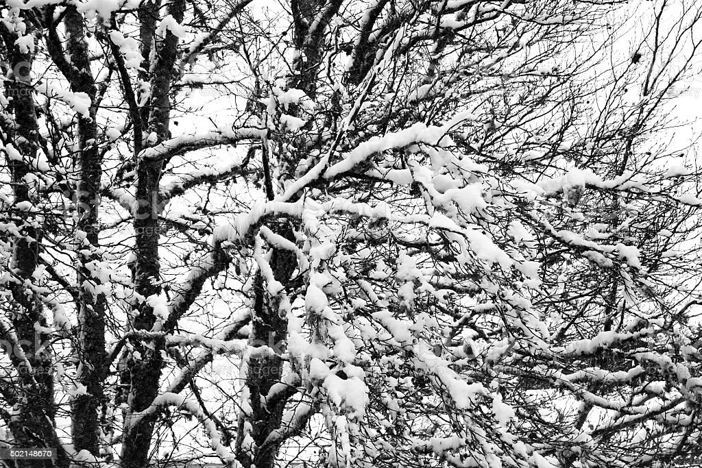 Arbres recouverts de neige stock photo