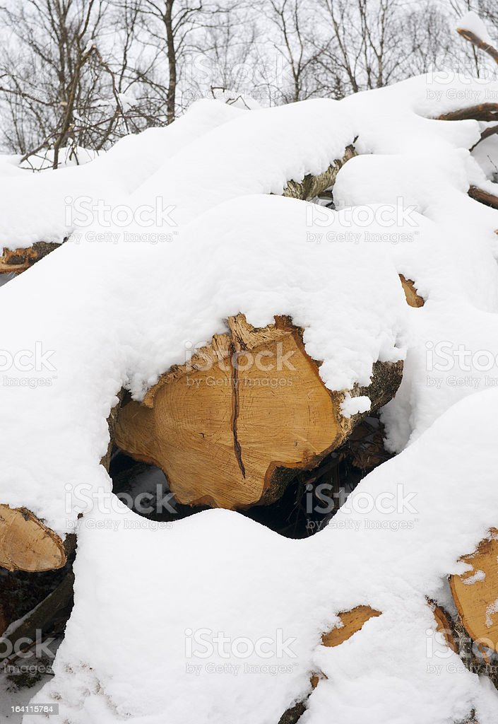 Snowcovered Treetrunks royalty-free stock photo