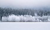 Wintery forest and mountains in central Washington state, USA