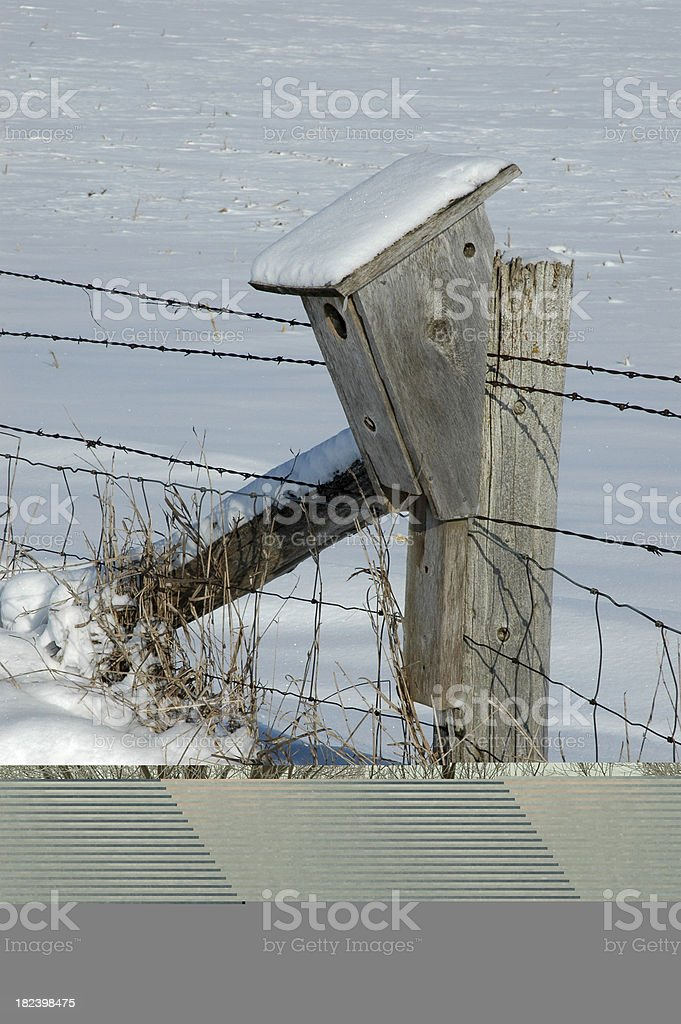 Snowdrift and Weeds at Sunset stock photo