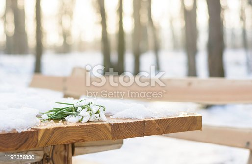 Galanthus nivalis flowers blooming in winter. Snowdrops and snow on the table and bench in the park on the mountain Fruska Gora in Serbia.