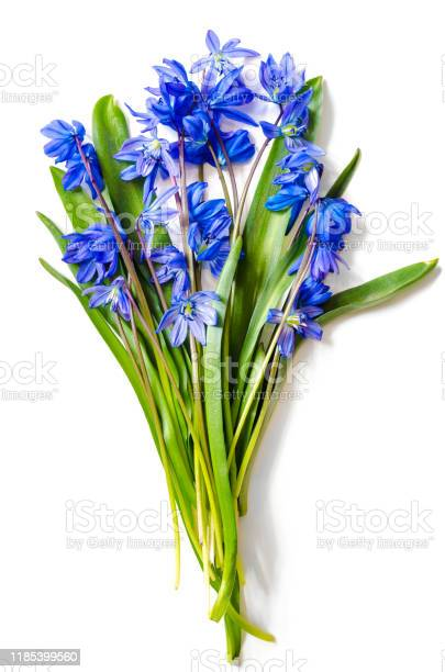 Snowdrops bouquet picture id1185399560?b=1&k=6&m=1185399560&s=612x612&h=dsaqei7ko9lvswzxp jdstwyok pzz2fl7cqagan5mw=