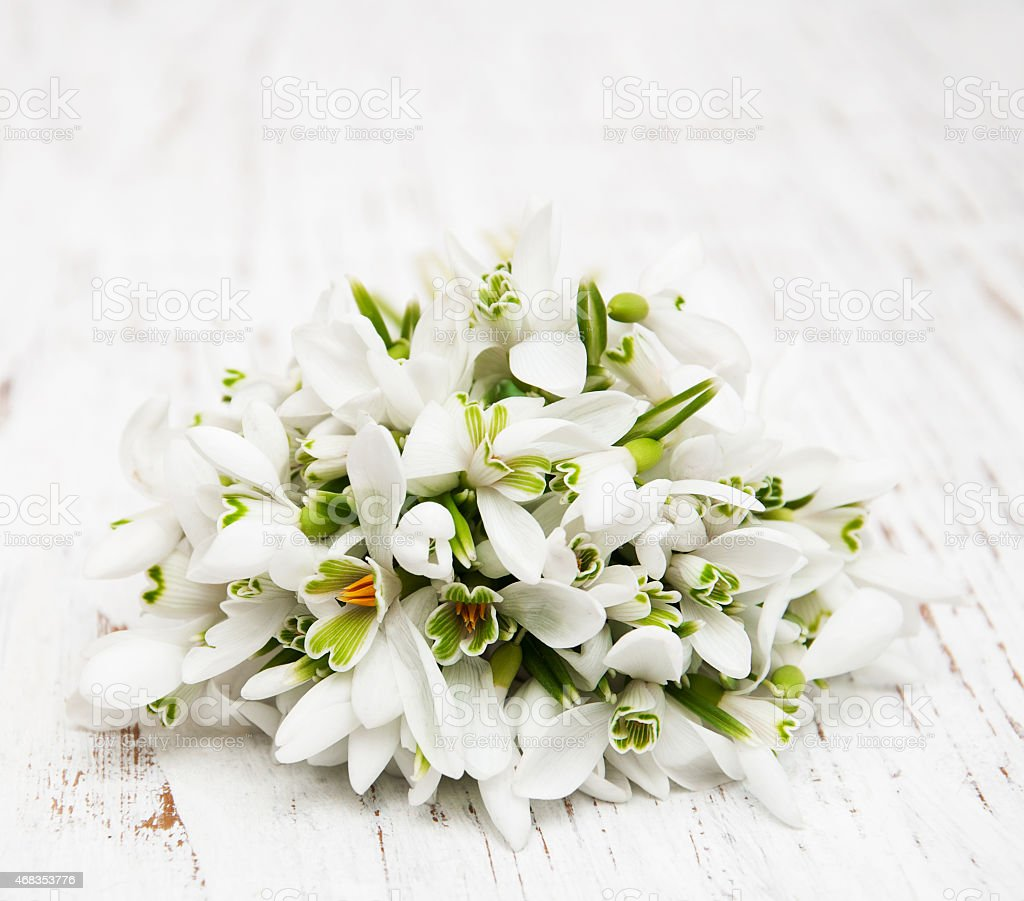 snowdrops bunch on wooden background royalty-free stock photo