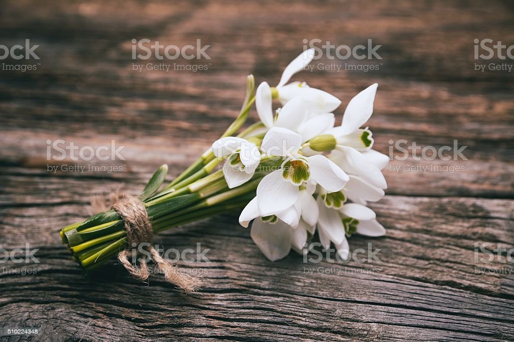 snowdrops bunch stock photo