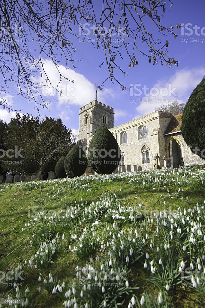 Snowdrops in an English Curchyard royalty-free stock photo