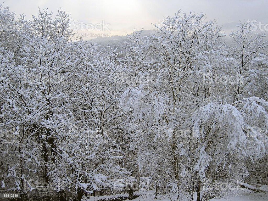 Snowed Landschaft Lizenzfreies stock-foto