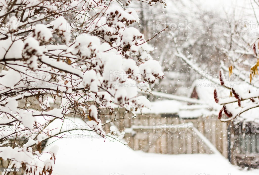 Snowfall in a countryside with trees in snow, defocused backgrond stock photo