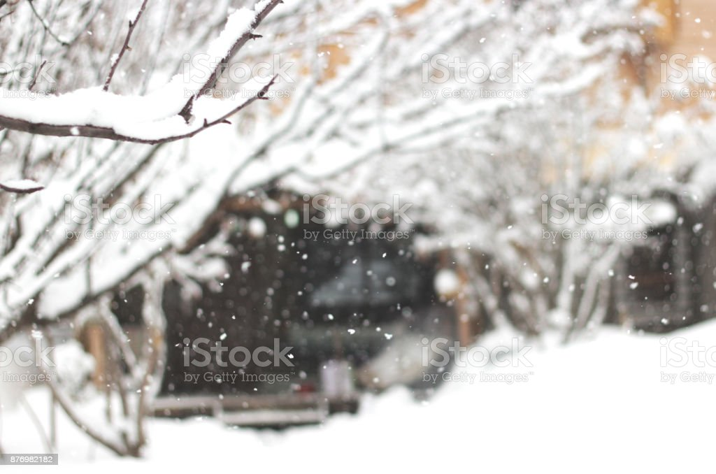 Snowfall in a countryside with trees in snow, defocused backgrond. stock photo