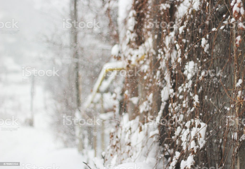 Snowfall in a countryside with trees in snow, defocused backgrond. Hello winter stock photo