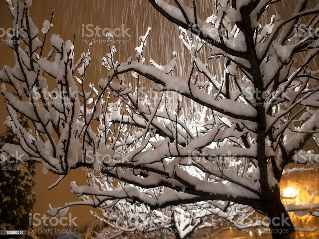 Snowfall in the evening stock photo