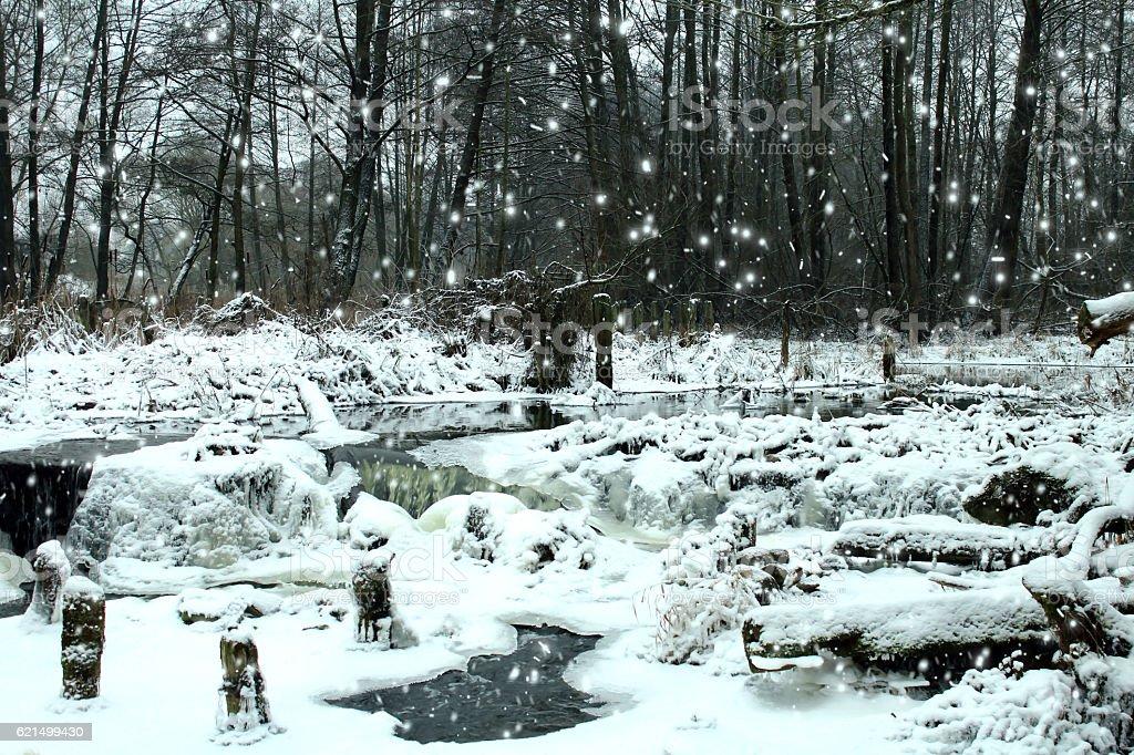 Nevicata nella foresta. foto stock royalty-free