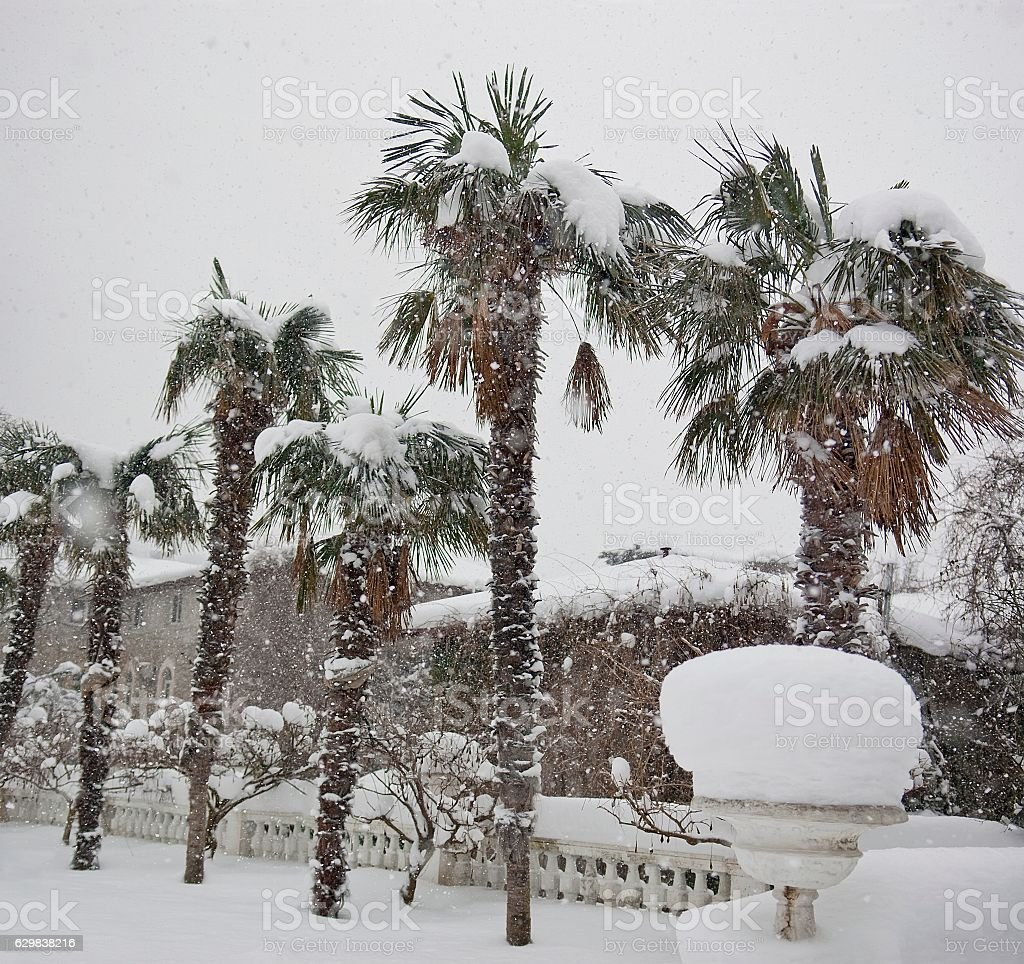 Snowfall in the park stock photo