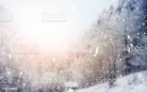 Photo of Snowfall in the Woods in Italian Alps Mountains