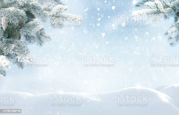 Photo of Snowfall in winter forest.Beautiful landscape with snow covered fir trees and snowdrifts.Merry Christmas and happy New Year greeting background with copy-space.Winter fairytale.