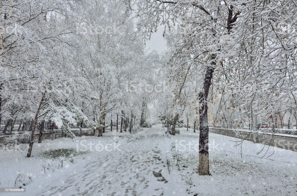Snowfall on the street. Tree branches, benches on alley snowcovers,...