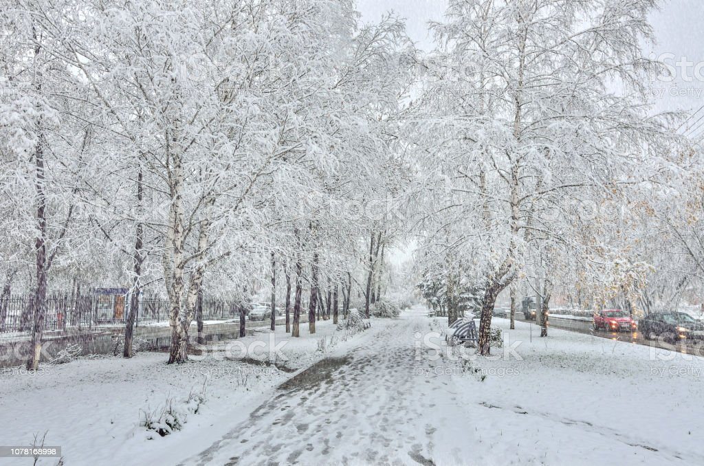 Snowfall on the street. Tree branches, benches on alley snow covers,...