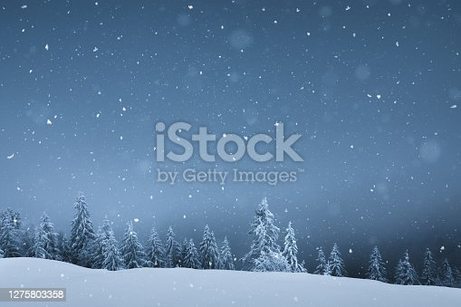 Winter background with snowcapped pine trees and snowflakes falling from the sky.