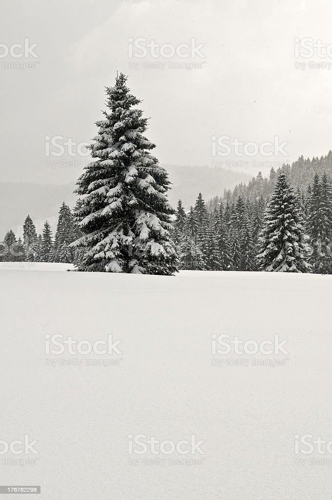 Schneemenge – Foto