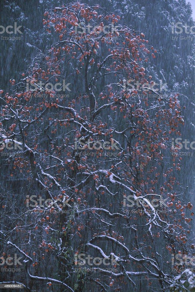 の降雪 ストックフォト