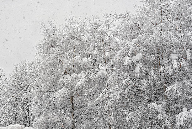 Snowfall2 stock photo