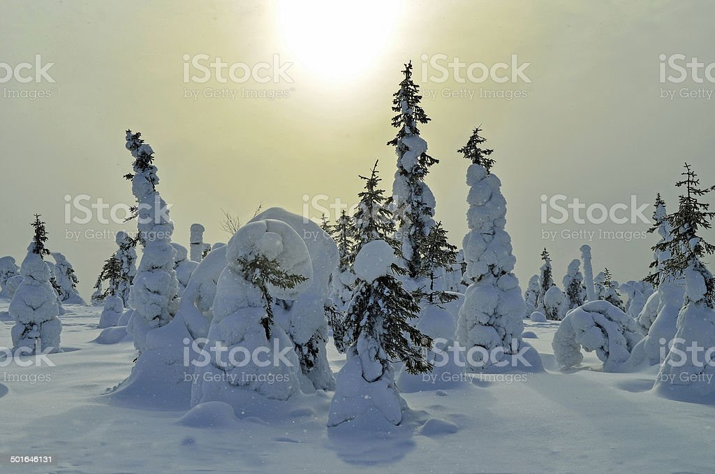 Snowfell and sunshine in snowy forest royalty-free stock photo