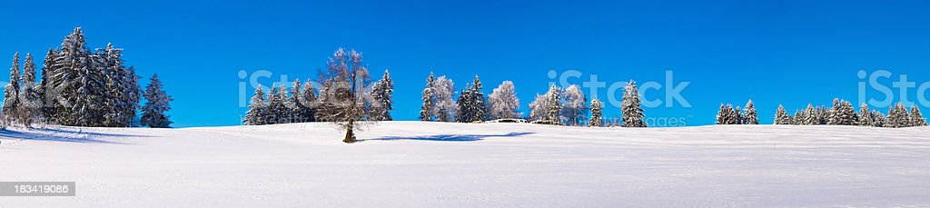 XXL Snowfield Panorama with trees royalty-free stock photo