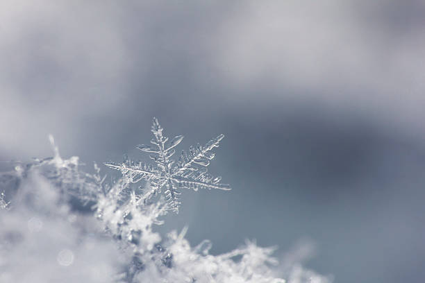 snowflake isolated on neutral background. close up. one - ice crystal stock pictures, royalty-free photos & images
