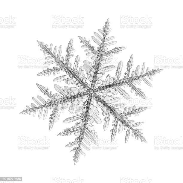 Snowflake isolated on uniform background picture id1019279730?b=1&k=6&m=1019279730&s=612x612&h=wvsl2kfsy0syvmdwvzzqgd6cy0e3xzughtgg4vazm1m=
