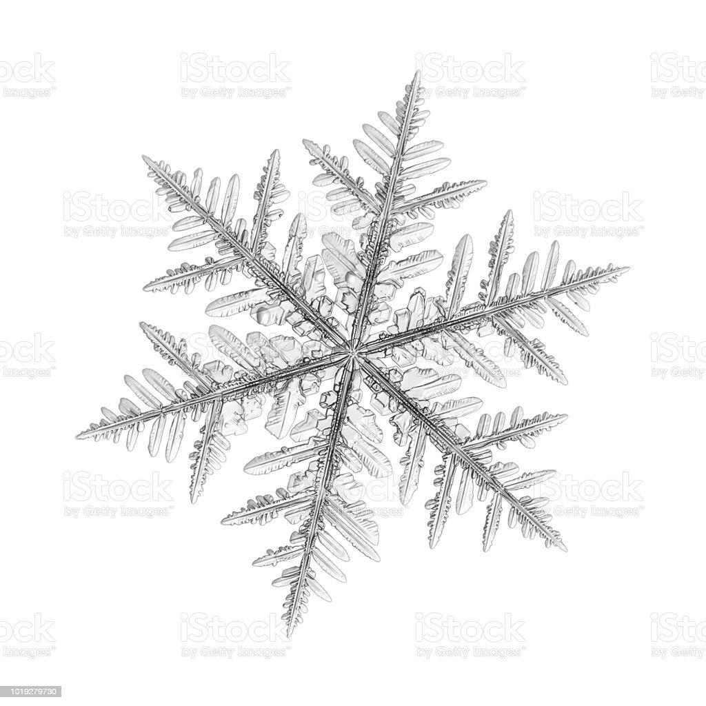 Snowflake isolated on uniform background stock photo