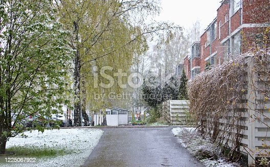 Snowfall in the spring in the suburbs of the city. Red brick houses in the background.
