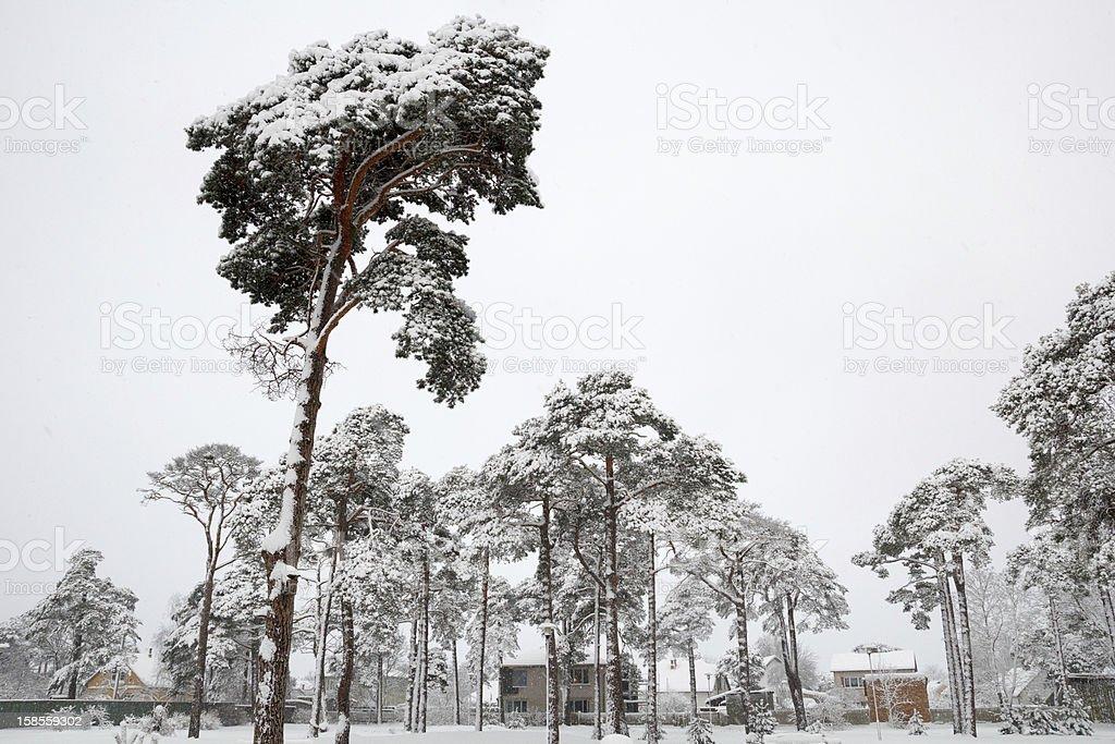 눈이 내리다 city park royalty-free 스톡 사진