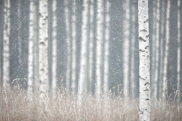 Schneien im Wald – Foto